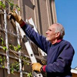 Man on ladder gardening